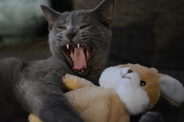 kočka s plyšákem